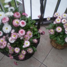 Moj ogródek na wysokościach:)))