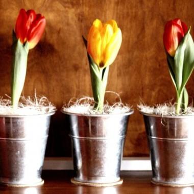 Wiosna u Iwy