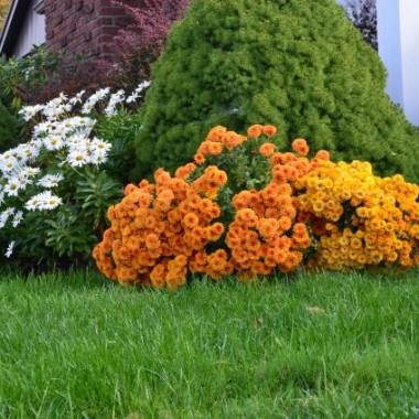 Kilka zdjęć jesieni jaką uchwyciłam w obiektywie Jesień w mojej wiosce jest nadzwyczaj kolorowa i piękna może dlatego że jest tutaj dużo drzew liściastych duża ilość klonów czerwonych a te kiedy się przebarwiają są po prostu balsamem dla oczu.W niedzielę świeciło pięknie słonko tak że i pszczoły przyleciały na ostatni posiłek tego roku .... Zapraszam