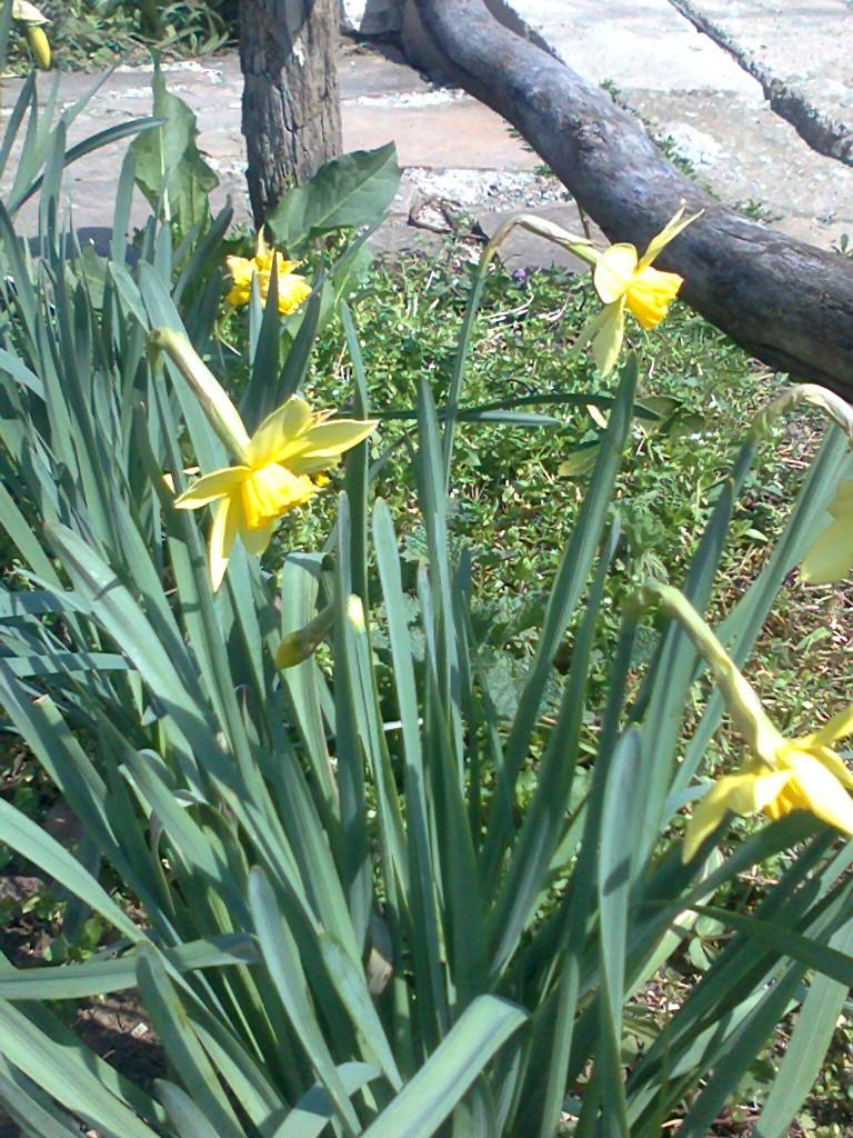 Jadalnia, Przymiarka z zajączkami - ogródek kwitnie