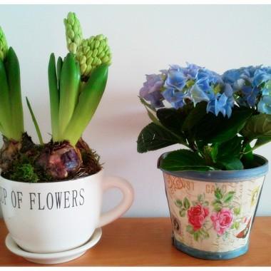 Wiosna w moim domu