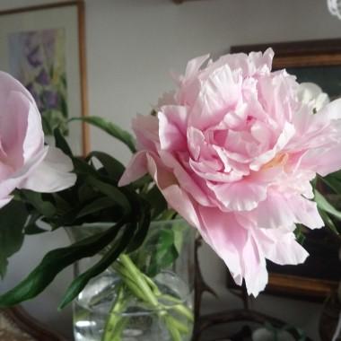 .............i piwonie ................przyniosłam małe białe kulki .............po godzinie miałam ogromny bukiet bajkowych kwiatów ...............