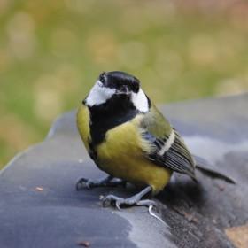 Listopadowe migawki:)