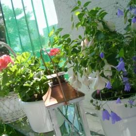 Lato na moim balkonie