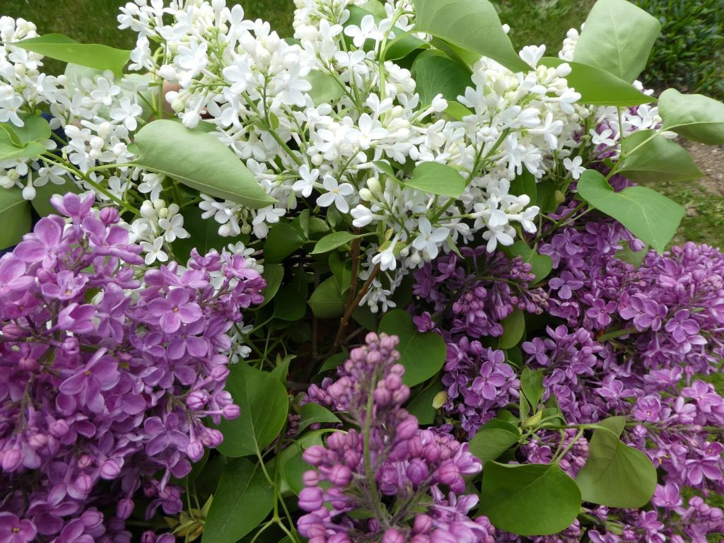 Ogród, Naprawdę mamy maj :)