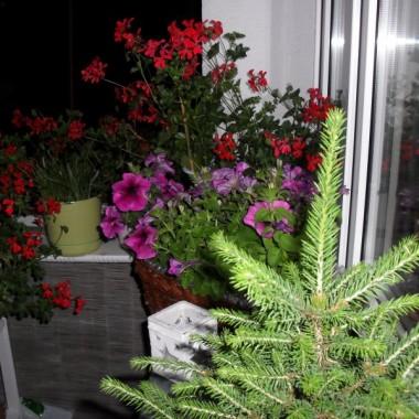 ...no!!!!!,ale już 3.06 posadziłam kwiaty na balkonie-hurrrrra...
