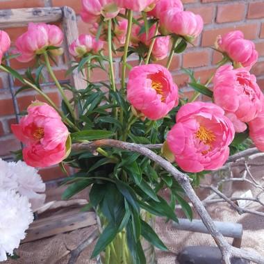 Piwonie - kwiatowe piękności.