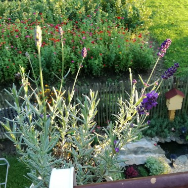 Jesień w moim ogrodzie i balkonie