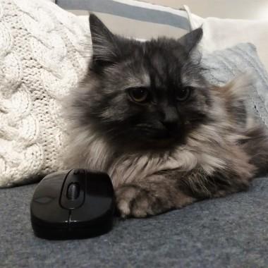Nikita i jej zdobycz - mysz! &#x3B;)