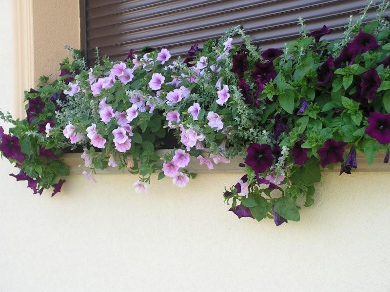 Balkon, Taras