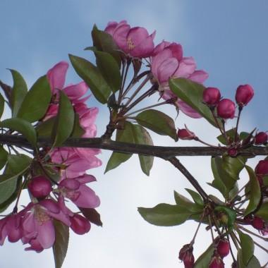 ............i różowe kwiecie............