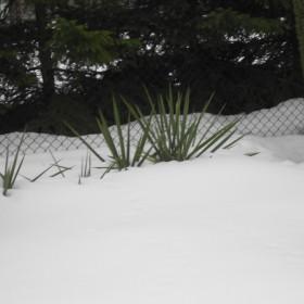 Wiosna dzisiaj:(((