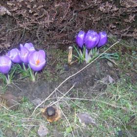 wiosna,wiosna :))