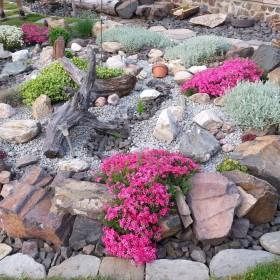 Mój ogród - Rośliny skalne i inne w ogrodzie