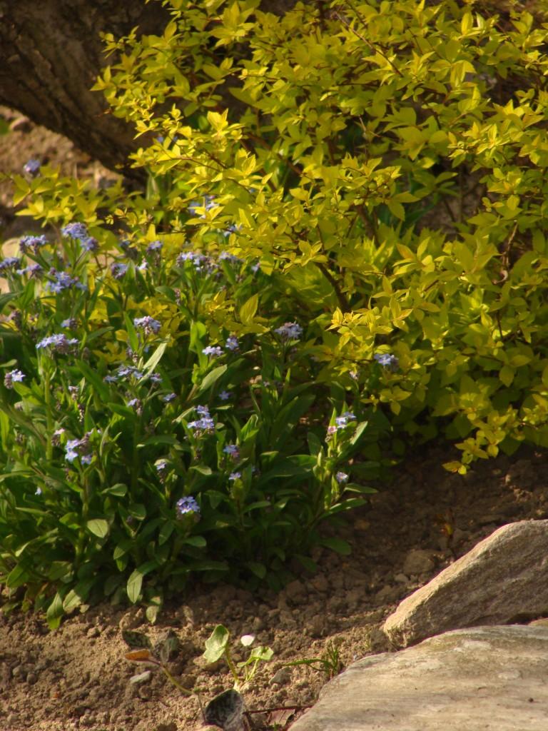 Rośliny, wiosna w  ogrodzie