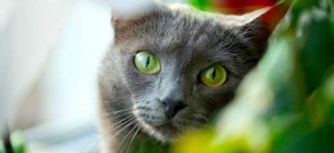 Koty i rośliny pod jednym dachem. Które gatunki są dla nich trujące?