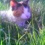 Ogród, moj ogrodek,moj lew moj kot