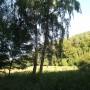 Rośliny, Wrześniowe fotki.................... - ..................i brzozy...................