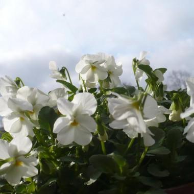 Idzie wiosna..................