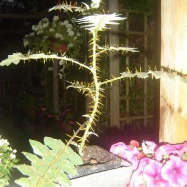 Mazelkowe kwiatki
