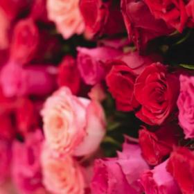 Ścianki pełne kwiatów