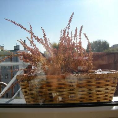 a za oknem wrzos