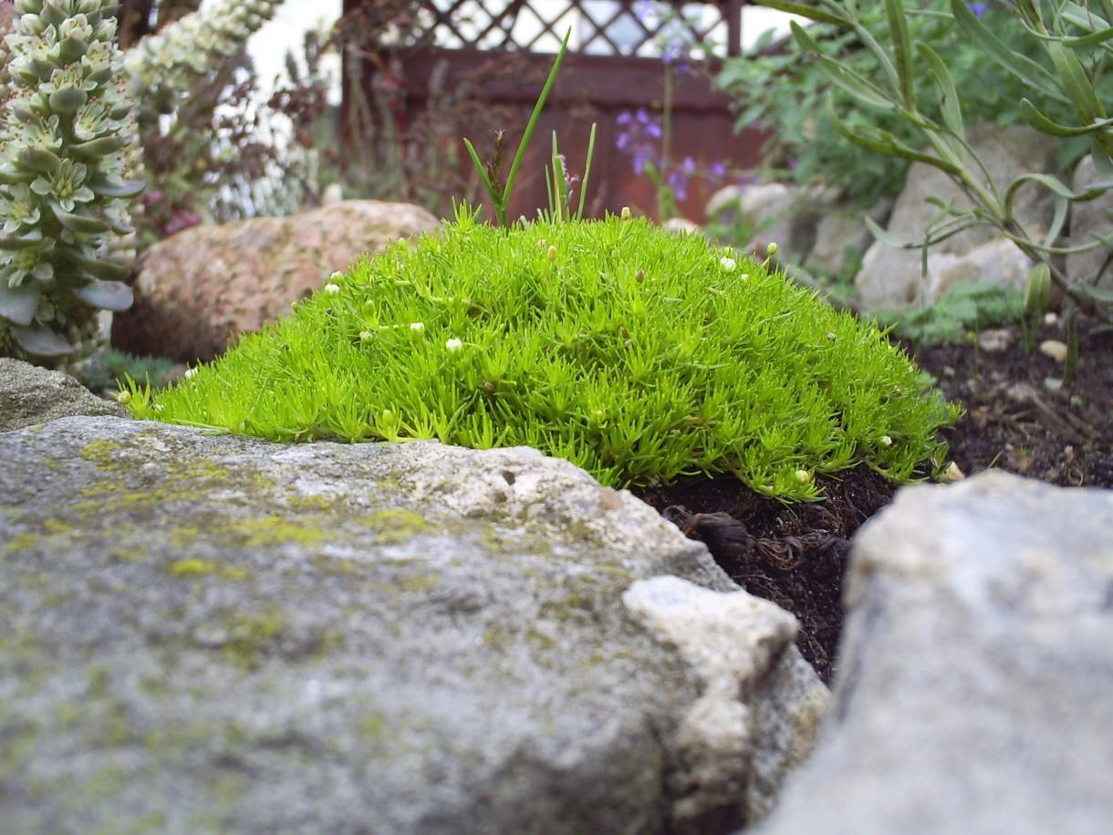 Pozostałe, Jesień w moim ogrodzie/tarasie - Jesienny dywanik w skalnym ogrodzie - to jego pierwsza jesień w nowym miejscu :)