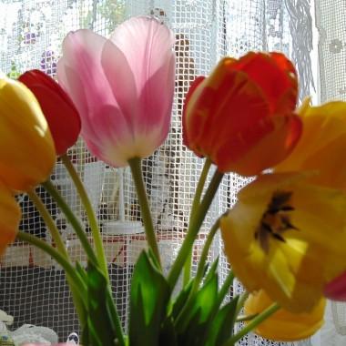 .................i tulipany..............