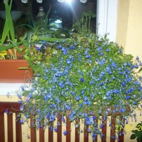 mój balkonik