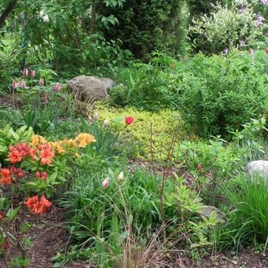 W ogrodzie.