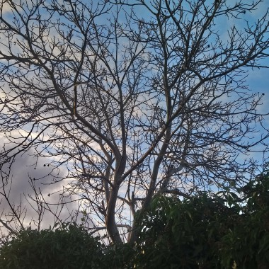 .......i błękitne niebo..............