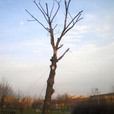 Gołe drzewa