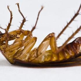Insekty w naszych domach