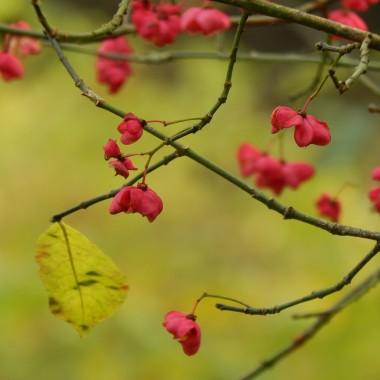 Perfect day.....To piękny słoneczny dzień,spędzony wspólnie z rodziną...pełen radości i przyjemności...Nasz czas...tak niewiele go mamy...Zatrzymajmy się na chwilę by podziwiać piękno natury,barwy jesieni...i  BYĆ RAZEM :)