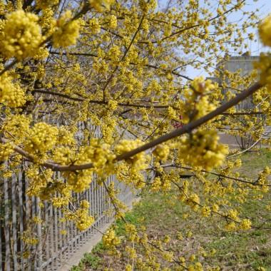 Biało żółto zielono czyli wiosna w pełni