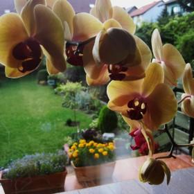 Mój ogródek:)