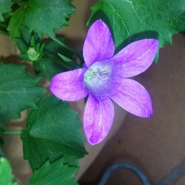 Kocham kwiaty ....