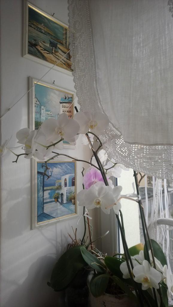 Dekoratorzy, Czekając na wiosnę .................. - .................... i storczyki kwitną................