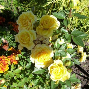 Zawitała do nas piękna złota Jesień:)))