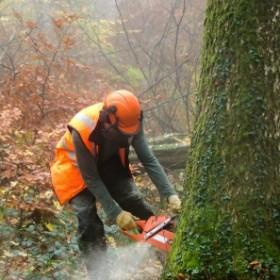 Zezwolenie na wycinkę drzew – sprawdź czy potrzebujesz