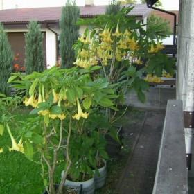 Ogród cz II