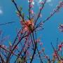 Jadalnia, Przymiarka z zajączkami - i brzoskwinka