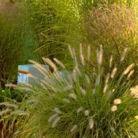 Ozdobne trawy na balkonie – co wybrać?