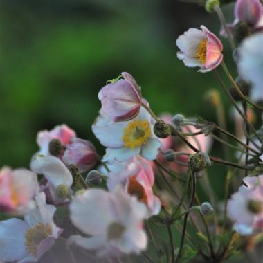 świat w rozkwicie nic tylko latać po ogrodzie i focić ......prawda Pani M ??????