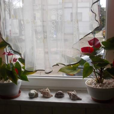 no właśnie czy tak ? ...te kwiatuszki zakupiłam specjalnie aby współgrały z kolorem na ścianach :)