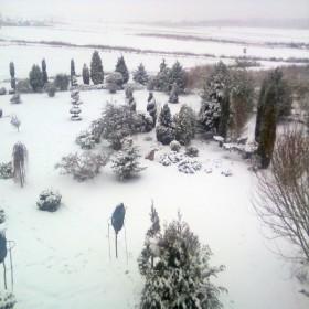 zimowy ogrod