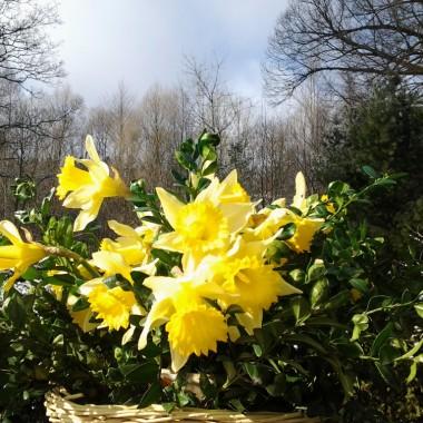 Trochę wiosny w zimie.