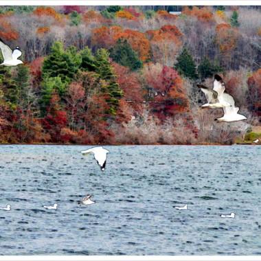 Dzisiaj mijają dokładnie 3! Przeprowadzka  z zachlapanego(23 stycznia)  NY,do oŚnieżonej ,małej mieŚcinki w Stanie Massachusetts. Przeskok z tętniącego życiem wielkiego miasta ,które nigdy nie Śpi,w okolice wypełnione zielenią,ciszą lasów i jezior.Przepiękne widoki ,Świeże powietrze.Prawie zupełnie nieodczuwana wilgotnoŚć powietrza,która w NY ,szczególnie latem,odbierała (chwilowo) chęci do wyjŚcia na ulice..A jednak..jednak tam żyło się intensywniej,wŚród ludzi,z wszelkimi dostępnymi Środkami lokomocji i wszelkimi ciekawymi miejscami w każdej z dzielnic. Losy ludzkie sa rzeczywiŚcie niezbadane. Za kilka miesiecy wybieram się na dłużej (może na b.długo) do Polski. Cały czas zmiany,zmiany,zmiany. Tym razem okolice na Pogórzu Karpackim, też zielone,z rzekami,strumkami,jeziorami i pięknymi Bieszczadami. Czy to już koniec mojego wędrowania, hm...tego nie wie nikt.Zostawiam w tej galerii kilka fotografii  z NY,z Webster&#x3B;
