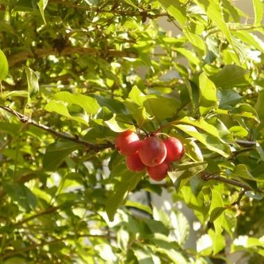 ..................i rajskie jabłuszka.................